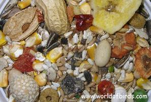 World of Birds- Gourmet Parrot Mix