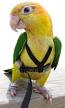 Aviator Harness-  Extra Small