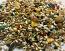 World of Birds- Conure Mix
