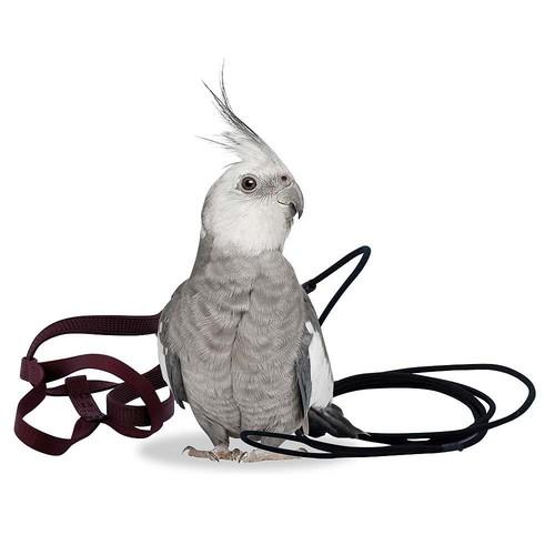 Aviator Harness-  Petite