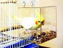 Tidy Seed No-Mess Bird Feeder