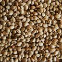Hemp Seed (sterilized)