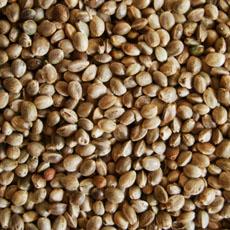 Hemp Seed (sterilized)