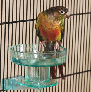Lixit Bird Bath