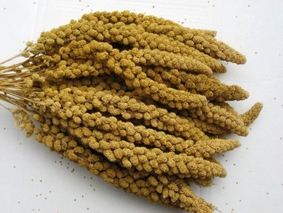 Bulk Spray Millet-  5 lb.Box