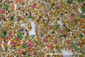 WOB Gourmet Parakeet