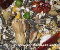 WOB Parrot (no fruit)