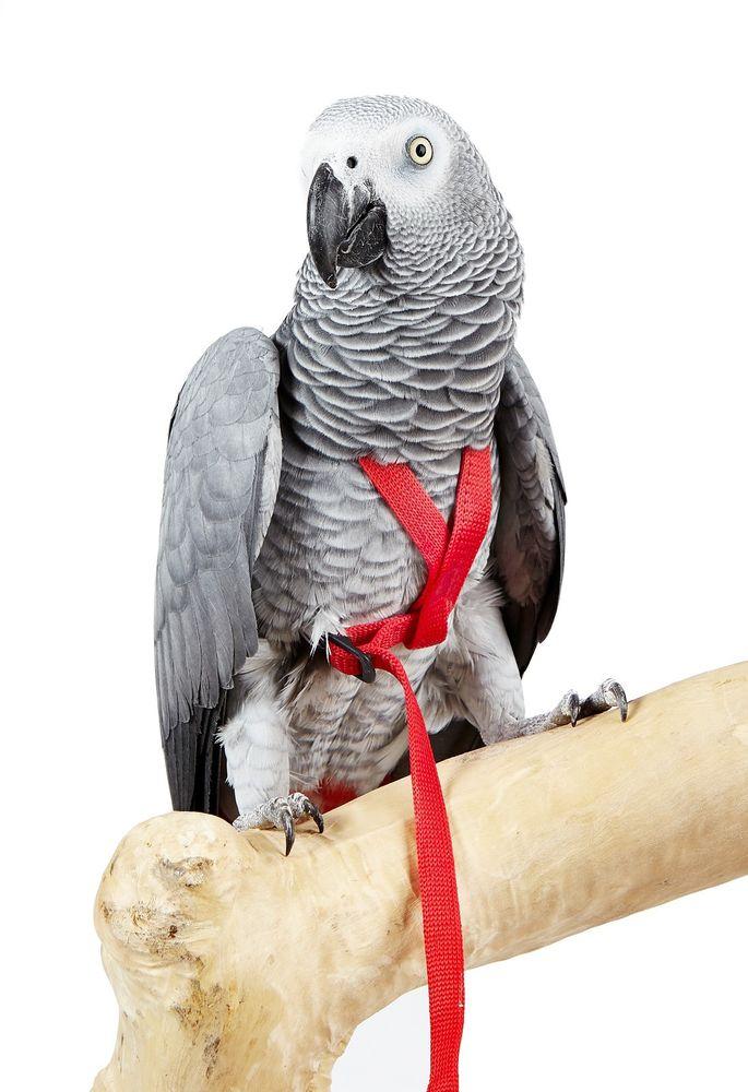 Aviator Harness-  Meduim